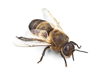 Bees nest treatment Cheetham Hill Pest Control