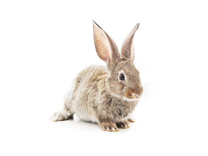 Rabbit control Cheetham Hill Pest Control