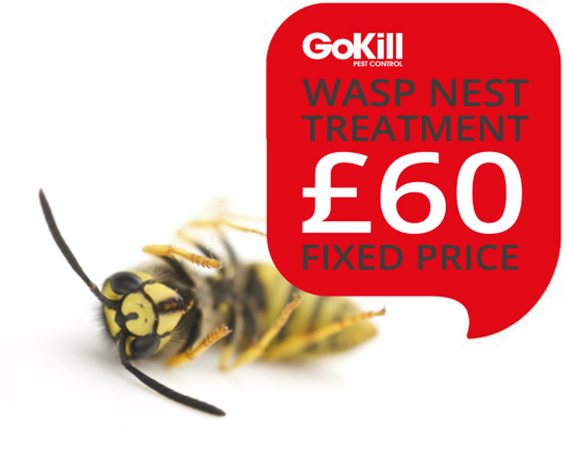 Wasp nest treatment Manchester £45
