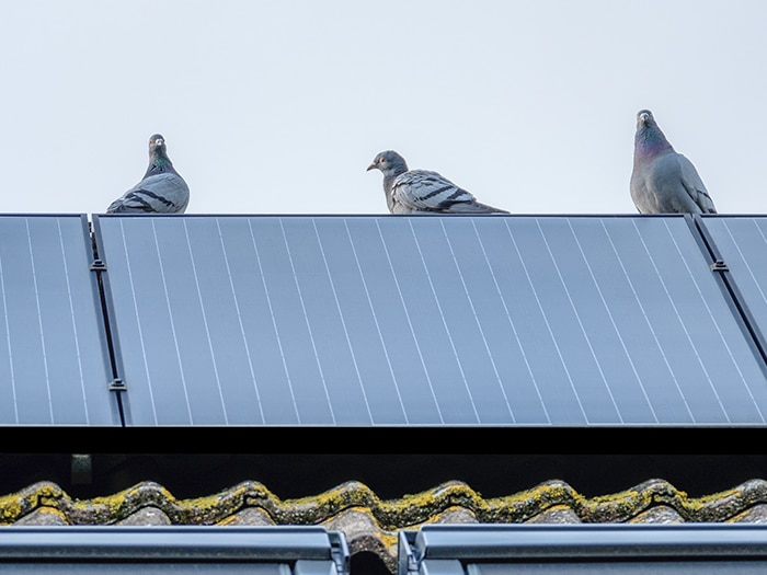 Why choose GoKill to install bird control and pigeon control proofing?