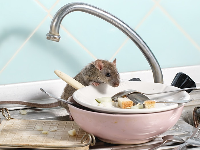What should I know about mice?