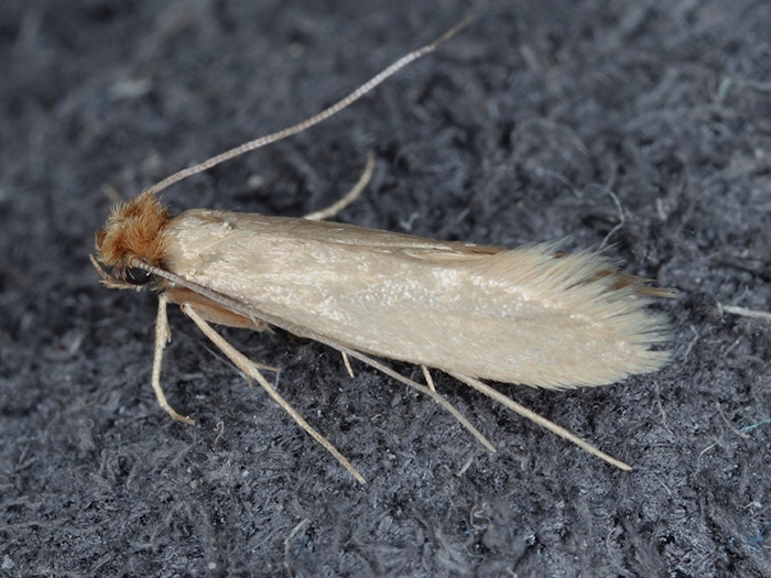 Do you provide a service for a clothes moth infestation at all hours?